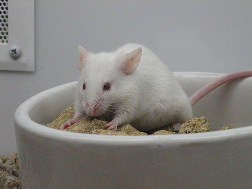 animal study to demonstrate link between obesity and cancer
